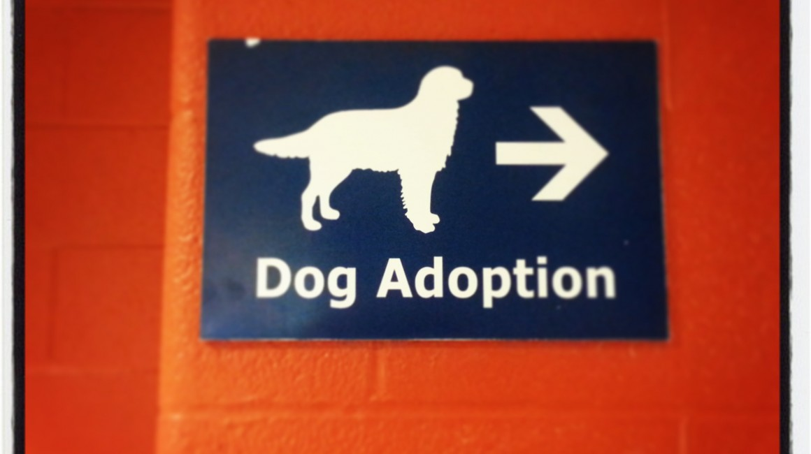 Sign at Toronto Animal Services (TAS) South
